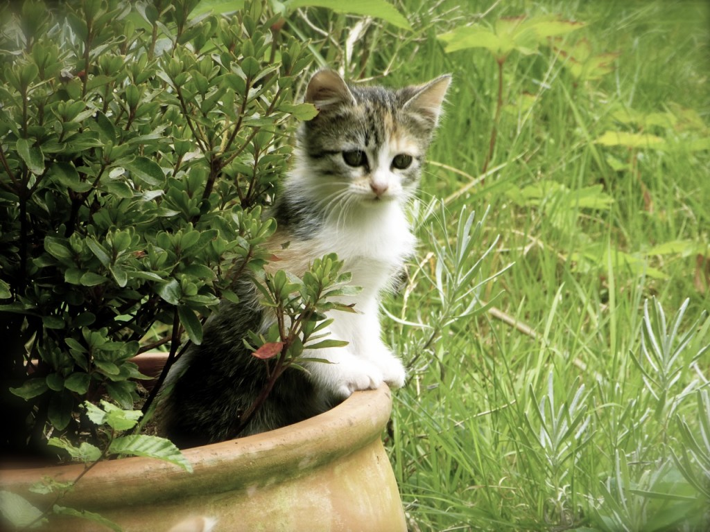 Kitten in Plant Pot